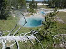 Fumerolle en stationnement de Yellowstone photo stock