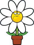 Fumetto Daisy Grumpy Fotografia Stock Libera da Diritti