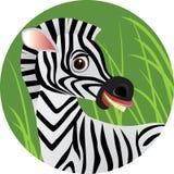 Fumetto della zebra Immagini Stock