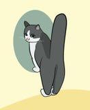 Fumetto di un gatto che sta sui piedi anteriori con la coda altamente alzata Fotografie Stock