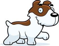 Fumetto Jack Russell Terrier Walking Fotografie Stock
