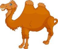 Fumetto sveglio del cammello Fotografia Stock Libera da Diritti