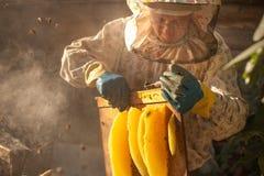 Fumeur d'abeille fumant dans le beeke saisonnier d'abeilles de miel de copyspace de rucher Photographie stock libre de droits