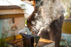 Fumeur d'abeille fumant en apiculture saisonnière d'abeilles de miel de copyspace de rucher cultivant la production biologique pr Photo libre de droits