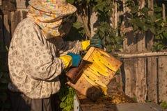 Fumeur d'abeille fumant en apiculture saisonnière d'abeilles de miel de copyspace de rucher cultivant la production biologique pr Image libre de droits