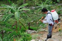 Fumigação da plantação de Maracuya fotos de stock royalty free