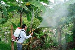 Fumigación de la plantación de Maracuya Fotografía de archivo libre de regalías