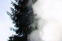 Fumo branco do fogo onde as placas e a serragem molhadas se encontram Fotografia de Stock Royalty Free