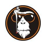 Fumo della scimmia del cerchio Fotografia Stock Libera da Diritti