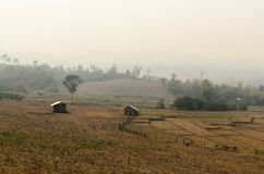 Fumo do incêndio florestal Fotos de Stock