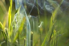 Fumo na grama Fotografia de Stock