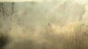 Fumo spesso dalla bruciatura dell'erba asciutta stock footage