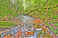 Função cara das árvores centrais da paisagem do rio nova. Imagens de Stock Royalty Free