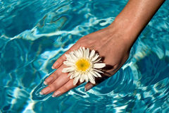 Fun. Women's hand in the water pool flowers royalty free stock image