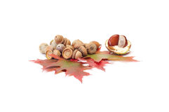 Fun acorns and leaves with chestnuts. Stock Photo