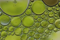 Green Bubble Abstract Macro Pattern unique. Fun artistic abstract Macro Photograph of green bubbles of oil floating on the surface of water. Focus is  on the royalty free stock photos