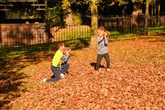 Fun in autumn leaves stock images