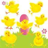 Fun baby chicks Stock Photos