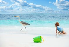 Fun baby games on the beach. Smart baby crawling chasing the big bird on the beach with toys on foreground Stock Photo