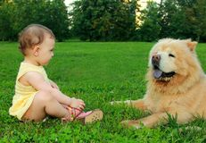 Fun baby girl in dress sitting near dog Royalty Free Stock Photography