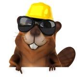 Fun beaver Royalty Free Stock Photos