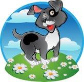 Fun black dog on color background stock image