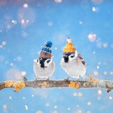 A fun bright card with a pair of cute birds sparrows in color kn. It cap on a Sunny winter day Royalty Free Stock Photos