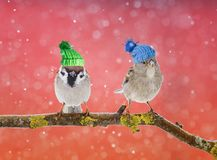 A fun bright card with two cute birds in the knit hats in the sn. Ow on a Sunny winter day Royalty Free Stock Photography