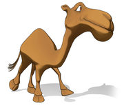 Fun camel Royalty Free Stock Photo