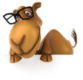 Fun camel Stock Photos
