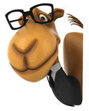 Fun camel Stock Image