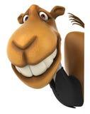 Fun camel Royalty Free Stock Image