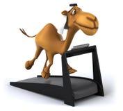 Fun camel Stock Images
