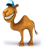 Fun camel Royalty Free Stock Photo