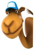 Fun camel Royalty Free Stock Photos