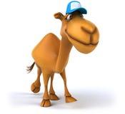 Fun camel Royalty Free Stock Photography