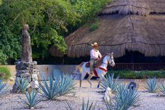 X Caret park in Mexico Royalty Free Stock Photography