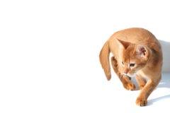 Fun cat Royalty Free Stock Image