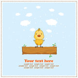 Fun chicken, greeting card, vector Royalty Free Stock Image