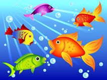 Fun colorful fish. Fun and colorful sea creatures: goldfish with other colorful options with blue bubbles Stock Images
