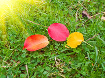 Fun colorful leaves and sunbeams by morning. Royalty Free Stock Images
