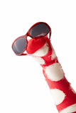 Fun colorful red sock puppet in sunglasses. Fun colorful red and white sock puppet in trendy matching colored sunglasses isolated on white with copy space Stock Photos