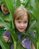 Fun in the corn field. 2 girls playing in a corn field Stock Image