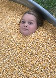 Fun In The Corn. Kids always have a great time around Halloween. One of the favorite places is the Pumpkin Patch. Families enjoy many activities such as hey stock images
