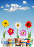 Fun daisies in pots. Funny daisies in colorful pots on sky background royalty free stock images