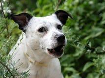 Fun dog Stock Photography