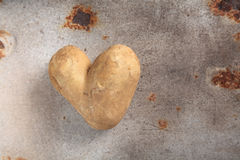 Fun double heart shaped potato or spud. Fun double heart shaped fresh uncooked whole potato or spud lying on an old grunge rusting metal surface with copy space royalty free stock image