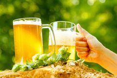 Oktoberfest fun cheers, beer mugs in hands. Fun drink beer mug in hand, Oktoberfest on outdoor Royalty Free Stock Photography