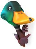 Fun duck Stock Photography