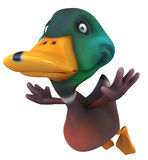 Fun duck Stock Images